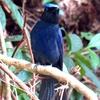 昆虫記者の原点・虫の宝庫は鳥を呼ぶ