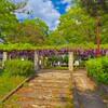 小野崎西児童公園の藤~つくば市とその周辺の風景写真案内(397)