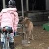 にっぽん縦断こころ旅2018秋~宮城県4日目、火野正平さんの自転車旅!*ネタバレあります