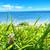 BEACH CAFE 薬膳ランチボックス『特製 夏土用御膳』