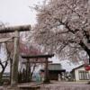 八幡神社(伝・伊達朝宗奉斎)の桜