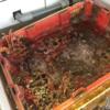 台湾 高雄の「旗津半島」にて海鮮料理を食べる 日本より少し安く食べることが出来ます
