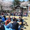 桜満開!お花見会開催!!
