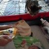 赤ちゃんを覗き込む猫。