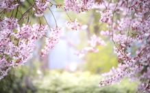 2021年4月 日本語教師のためのオンラインイベント情報