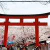 "<span itemprop=""headline"">50種の桜、平野神社</span>"
