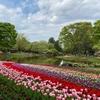 昭和記念公園のチューリップ。
