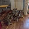 【一日一枚写真】子猫相撲【一眼レフ】
