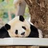 中国語初心者が留学に行くべきではない3つの理由
