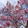 もうすぐ桜の季節がやってきますね