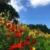 【長野県白馬村】白馬岩岳ゆり園は2018年で完全に閉園、来年以降も予定なしとのこと