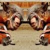 【地方競馬】ジャパンダートダービー 2020 予想〜カフェファラオ1.0倍⁉︎それなら本命はあの馬だ‼︎〜