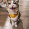 かわいい猫はわが子