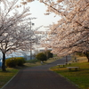 4月7日が雨でも入会手続きは行います。