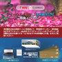 済州島(チェジュ島)キャンペーン #ティーウェイ航空✕済州観光公社の12月特典イベント!