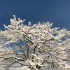 雑感 Vol.22 ~雪かき~