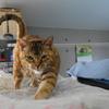 3月の後半 #ねこ #cat #猫 どらやきちゃんB