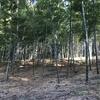 灰方の竹藪