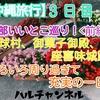 【沖縄旅行】3日目!中部いいとこ巡り!<前編>琉球村、御菓子御殿、座喜味城跡!いろいろ周り過ぎて充実の一日!