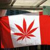 日本も大麻(マリファナ)を合法化するべき?世界で進んでいる大麻非犯罪化、合法化の動き