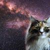 いいですか、宇宙と周波数をあわせるのです