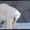 「札幌でしかできない50のこと」全部行ってみた。№19円山動物園①