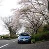 せっかくの桜も天気が残念な週末