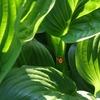 「加湿器」を買おうか迷っている方へ。「観葉植物」という選択肢はいかがでしょうか?