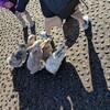 ウサギの島こと大久野島へ観光で訪れて感じた魅力と注意点