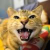 3月前半の #ねこ #cat #猫 どらやきちゃんA