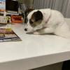 「もずく」の💩が白い⁉︎ウイルス検査が終わっていれば動物病院に行き原因を聞いてきます。