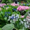 【LINEトラベルjp】ガラスのあじさいとバラ×初夏の花々の共演