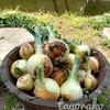 玉ねぎとジャガイモのおしゃれな保存方法