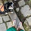 【神と仏の長距離走】空也の滝 〜 月輪寺 〜 愛宕神社
