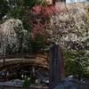 🌸湯島天神は梅が満開に近づきとても綺麗です☺