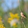 週末の鳥見