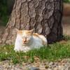 護国寺でネコを撮る(1)