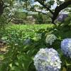 東京散歩 不忍の池〜白山神社