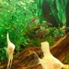 熱帯魚🐟🐠と猫さん🐱🎵💗生き物いっぱい♥