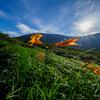 夏の東北・月山を歩き久々の夏山とお花畑を楽しんできた