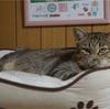 ひたすら猫ベッドでくつろぐプーチンさん