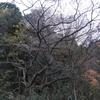森林公園テクテク👣