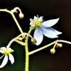 季節の花(令和三年五月 2)
