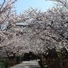 【鎌倉いいね】鎌倉の桜開花状況(3月26日現在)建長寺の桜が見頃です。
