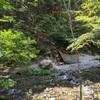 大鳩園キャンプ場 奥武蔵の秘境・大人の隠れ家で、落ち着いた大人キャンプ