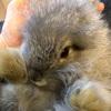 パンダちゃんの子ウサギ生後8週を迎えました♪