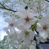 桜とかHTTPとか