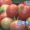 GW2日目 トマト選別大忙し 【熊本】