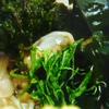 【たけしの家庭の医学】アカモク(ぎばさ)で内臓脂肪撃退!アカモクのレシピ、食べ方