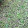 雑草やコケども、除草剤をくらいやがれ!でも子供がいるから優しめで。